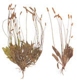 Set of wild dry pressed plants royalty free stock images