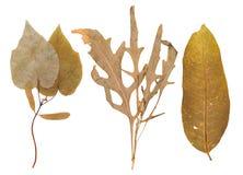 Set of wild dry pressed plants Royalty Free Stock Photo