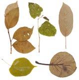 Set of wild dry pressed plants Stock Photos