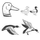 Set of wild ducks icons isolated on white background. Duck hunti Stock Photo