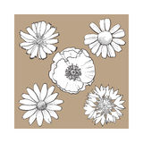Set of wild, field flowers - poppy, chamomile, cornflower, daisy. Set of wild, black and white field flowers - poppy, chamomile, cornflower, daisy, sketch vector Royalty Free Stock Photos