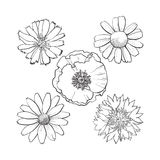 Set of wild, field flowers - poppy, chamomile, cornflower, daisy. Set of wild, black and white field flowers - poppy, chamomile, cornflower, daisy, sketch vector Stock Photography