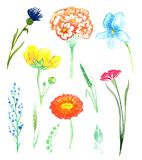 Set of wild flowers: bellflowers, violets, buttercup, forget-me, cornflower. Set of wild flowers forest and meadow flowers, isolated hand painted watercolor Stock Photography
