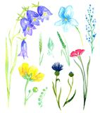 Set of wild flowers: bellflowers, violets, forget-me, cornflower. Set of wild flowers forest and meadow flowers, isolated hand painted watercolor illustration in Royalty Free Stock Photography