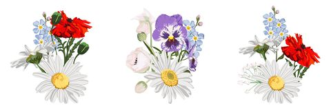 Set of wild flowers bouquets, Chamomile Daisy, buds, red poppy, viola and forget-me-not. Botanical illustration on white background for design, hand draw stock illustration