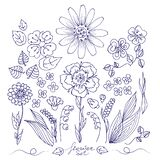 Set of wild flowers and leaves, hand-drawn