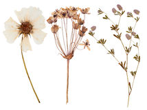 Set of wild flowers pressed royalty free stock photography