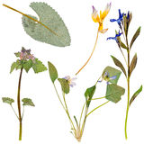 Set of wild flowers pressed Stock Image