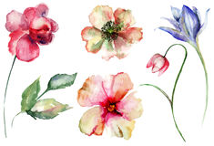 Set of wild flowers. Watercolor illustration Royalty Free Stock Photos