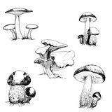 Set of wild mushrooms Royalty Free Stock Photos