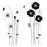 Set of wild plants, poppies and dandelions - vector illustration Royalty Free Stock Photos