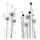Set of wild plants, poppies and dandelions - vector illustration. Set of wild plants, poppies and dandelions Royalty Free Stock Photos