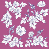 Set of wild rose. Vector illustration Royalty Free Stock Photos
