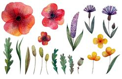 Set of wildflowers and herbs. Poppy, cornflower and other flowers. Isolated stock illustration