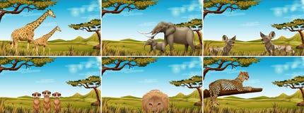 Set of wildlife in savanna. Illustration royalty free illustration