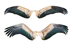 Set of wing Royalty Free Stock Image