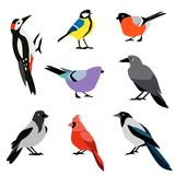 Set of winter birds. Flat design vector birds icon set. Popular birding species collection Royalty Free Stock Image