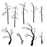 Set of winter trees Royalty Free Stock Photos