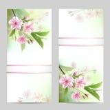 Set wiosna sztandary Obraz Royalty Free