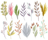Free Set With Fantasy Plants And Leaves. Decorative Floral Design Elements Royalty Free Stock Image - 87654206