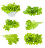 Set With Lettuce Salad Royalty Free Stock Photos