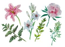 Set With Watercolor Peony Lily Fern Spring Summer Collection With Nature Elements Flowers Leaves Greens For Bouquet Stock Images