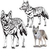 Set of Wolfs Stock Image