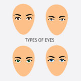 Set of woman eyes types vector flat Illustration Stock Photography