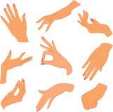 Set woman hands. Illustration royalty free illustration