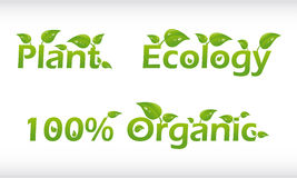 Set of words with leafs - plant, ecology and 100%. Set of vector words with leafs - plant, ecology and 100% organic Royalty Free Stock Photo