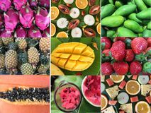 Set wzory z owoc tropikalne inkasowe owoc Obraz Royalty Free