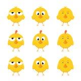 Set of yellow chicks Stock Image