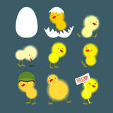 Set of yellow chicks: white egg and chicken. Chick protests and Stock Image