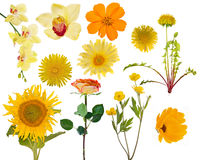 Set of eleven yellow flowers on white Stock Photography