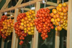 Set of Yellow and Orange Cherry Tomatoes Grouped in Clusters and Hung on a Wooden Beam stock photo