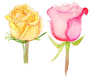 Set of yellow and pink roses. Set of watercolor yellow and pink roses on white background Royalty Free Stock Images