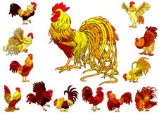 Set yellow red roosters on white Stock Photography