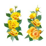 Set of yellow roses. Stock Image