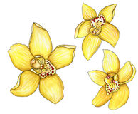 Set of yellow watercolor orchids with a stroke isolated on. Scrap set of yellow watercolor orchids with a stroke isolated on white Stock Photos