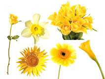 Set of yeloow flowers Royalty Free Stock Photography