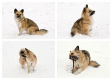 Set with young dog in the snow Royalty Free Stock Photos