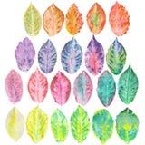 Set z akwareli jesieni liśćmi Zdjęcia Stock