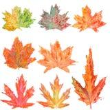 Set z akwareli jesieni liśćmi klonowymi Fotografia Stock