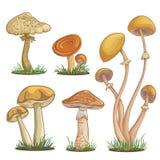 Set z różnorodność rocznik kolorowymi realistycznymi pieczarkami ilustracji