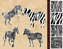 Set of zebra silhouettes with seamless texture Stock Images