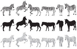 Set of zebra on a white Royalty Free Stock Image