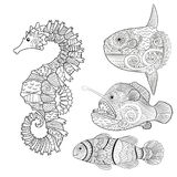 Set with zentangle fish. Set of fish - sea horse, moon fish, monk fish and clown fish. Collection of anti stress coloring pages with high details in zentangle Stock Photos