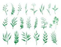 Set ziele i gałąź Fotografia Stock