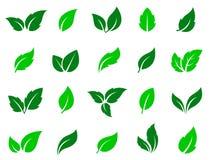 Set zieleń opuszcza ikony Fotografia Stock