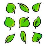 Set zieleni liście Zdjęcia Stock
